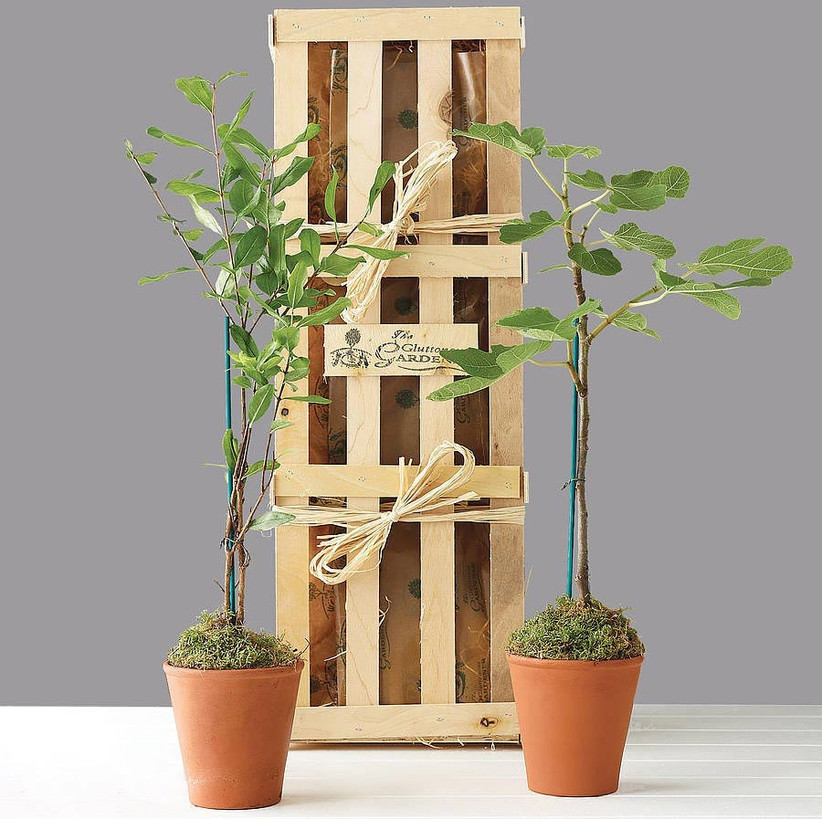 wooden-plant-crate-with-trees