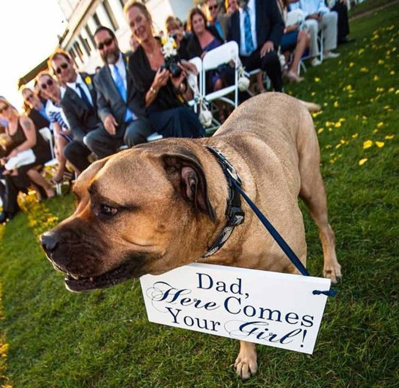 dog-with-sign-at-wedding