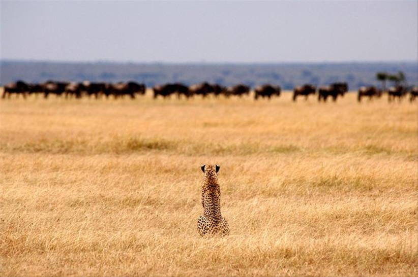 The Wilds of Kenya