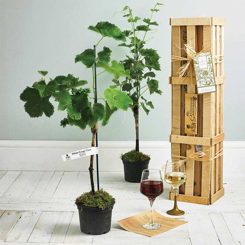 miniature-vineyard