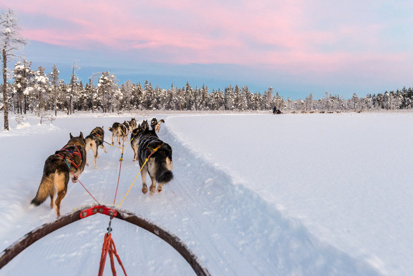Husky sled in Lapland