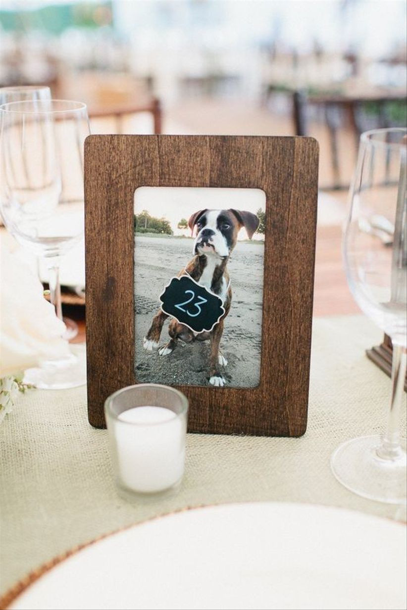 Pet photograph wedding table number