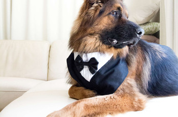 27 Cute Dog Wedding Outfits for Your Best Pal