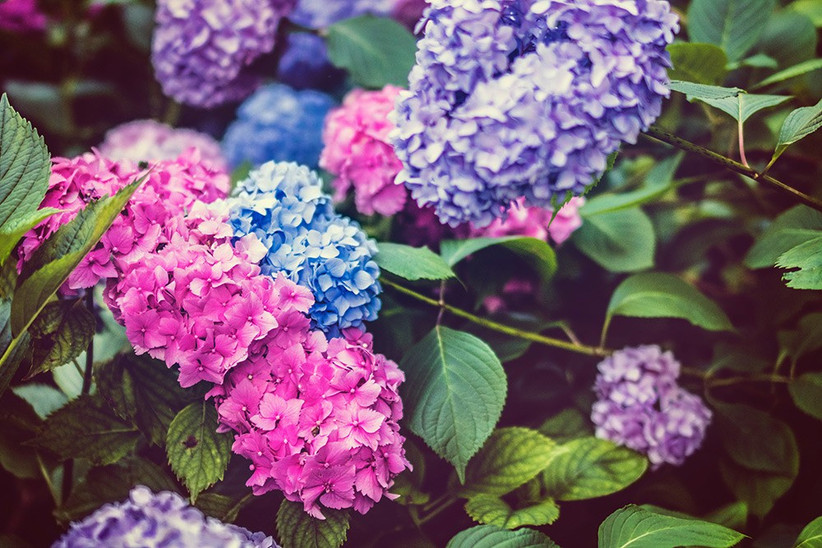 wedding-flowers-on-a-budget