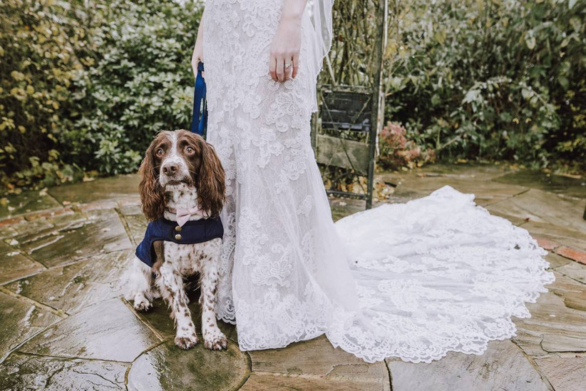 Dog ring bearer standing next to a bride