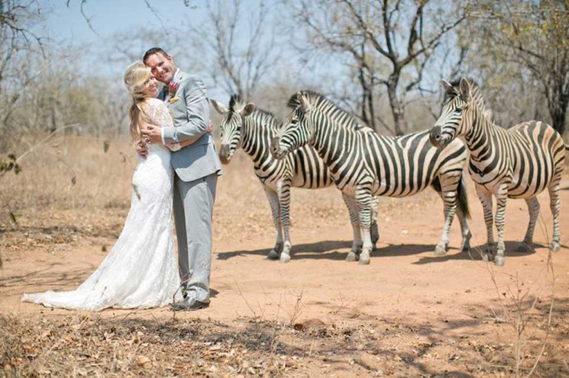 zebras-at-a-wedding