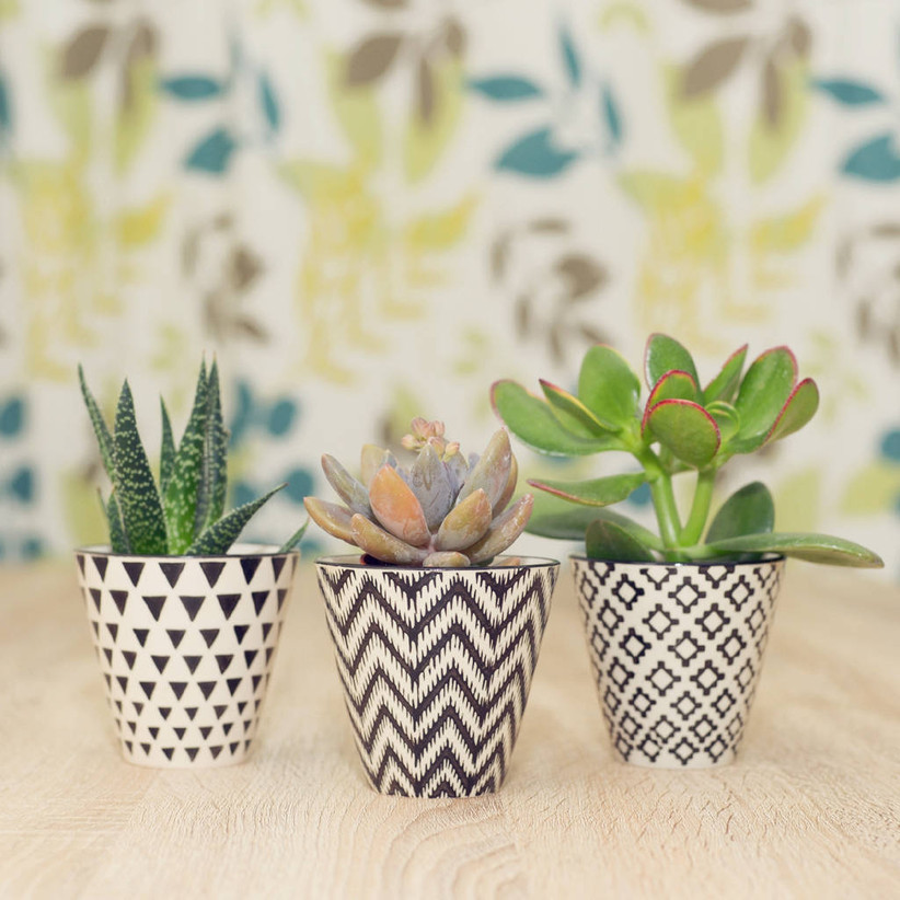Three succulents in monochrome pots