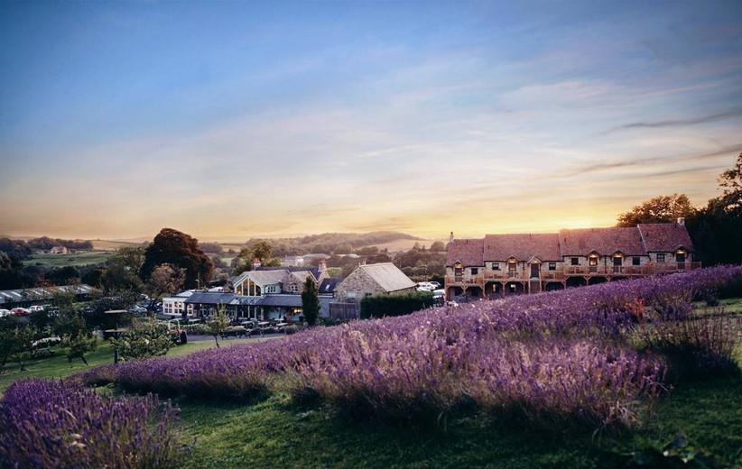 Wedding venue overlooking a lavender field