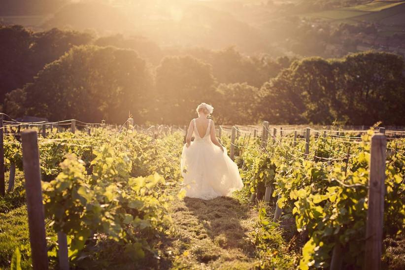 Bride in a vineyard