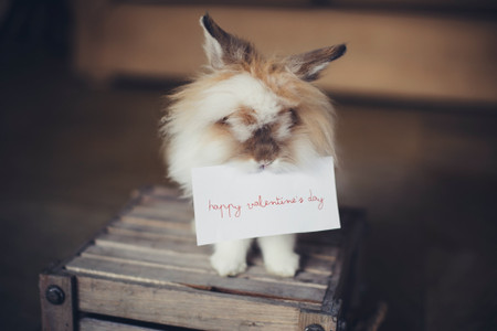 Valentine's Day Messages: What to Write in a Valentine's Day Card