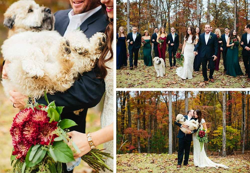 cute-dog-at-wedding