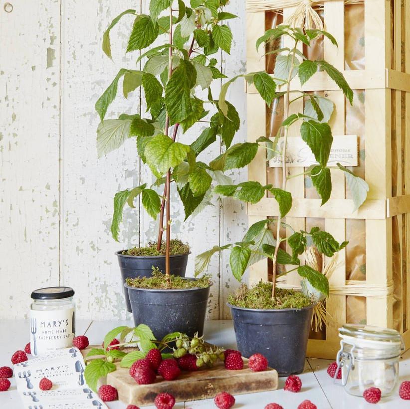 grow-your-own-raspberry-jam-gift