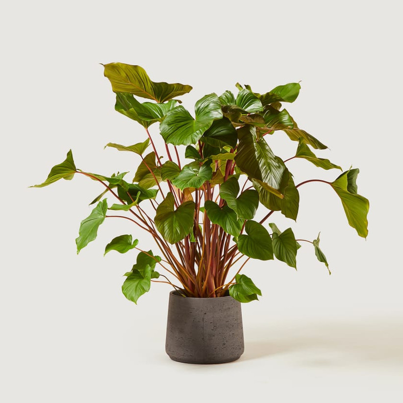 Green plant in a grey pot