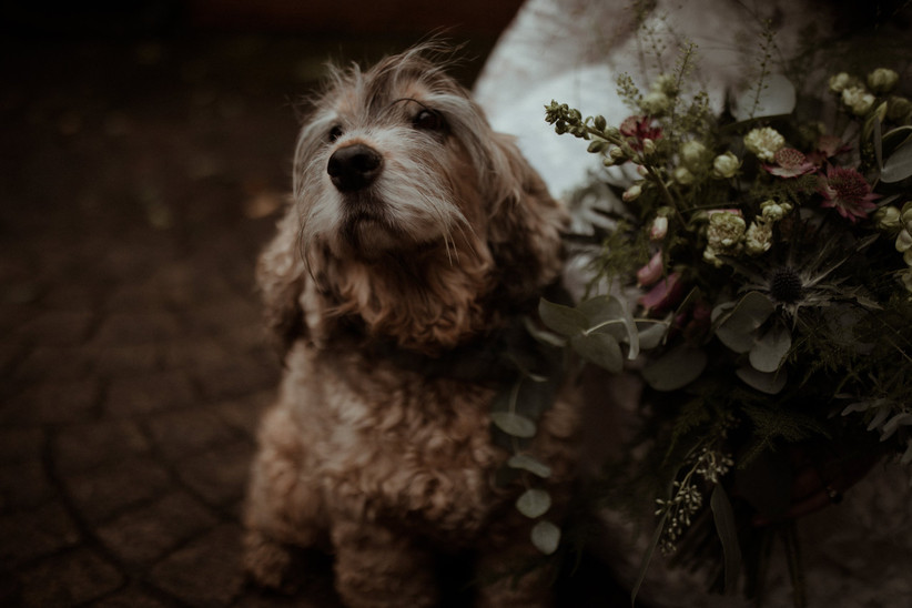 Cocker spaniel with his head tilted up next to a foliage rich wildflower bouqet