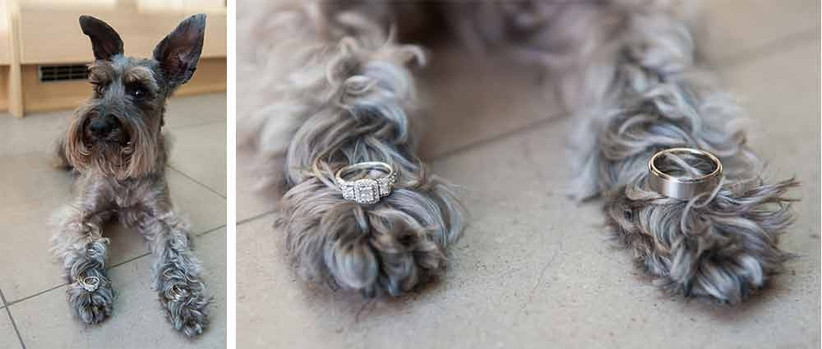 dog-as-a-ring-bearer
