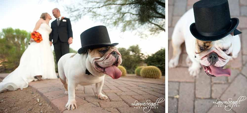 top-hat-dog