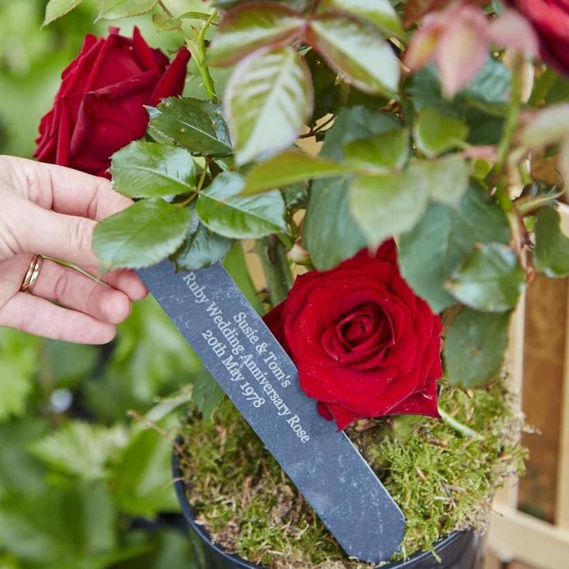 ruby-anniversary-rose-gift