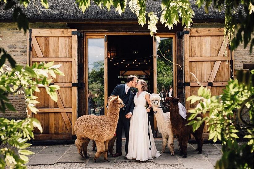 Couple at farm wedding with llamas