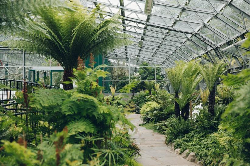 Green trees in Duthie Park Winter Gardens