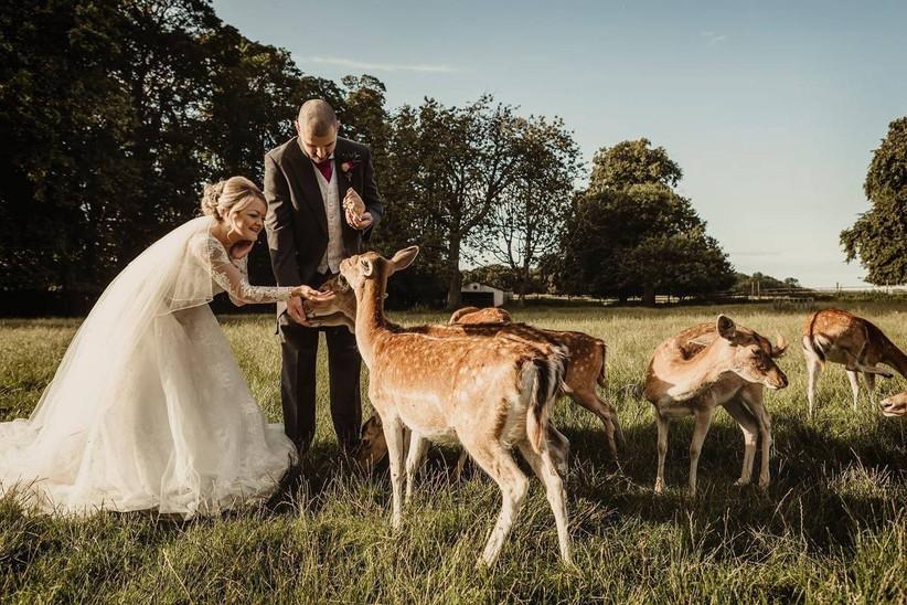 Bride and groom feeding deers