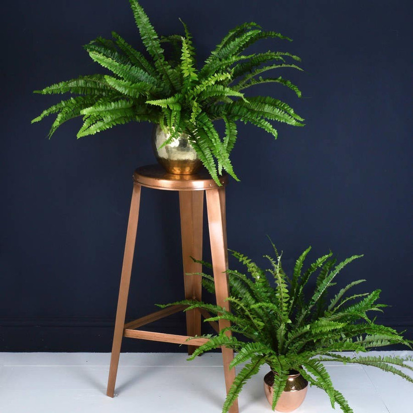 house-plant-from-miafleur-at-not-on-the-high-street