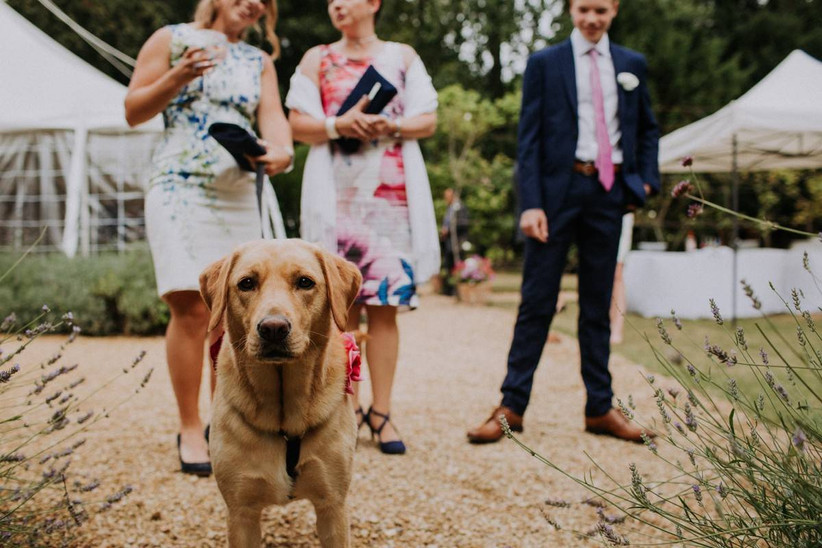 Wedding guests standing next to a dog