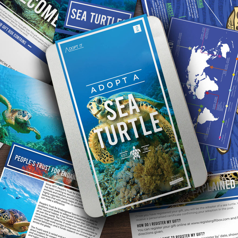 Adopt a sea turtle pack