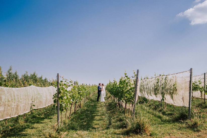 Couple holding hands standing in a vineyard
