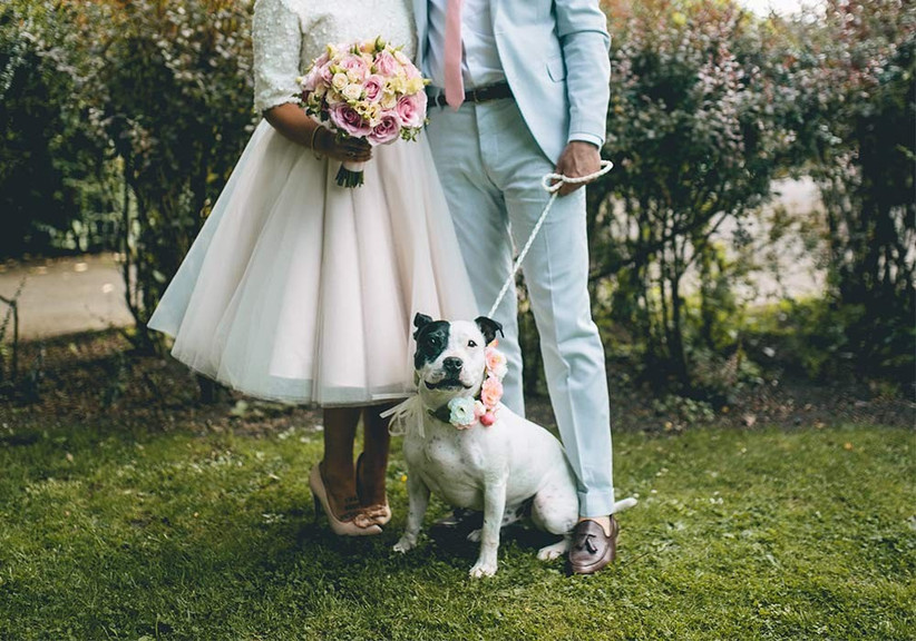 dogs at weddings - story and colour