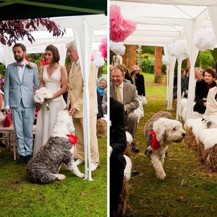 fluffy-dog-at-wedding