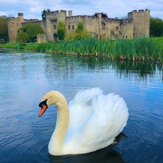 Allington Castle 3