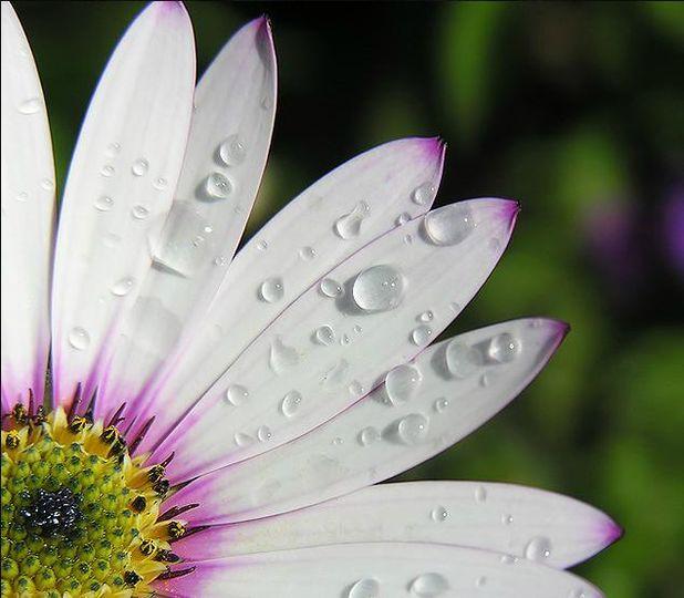 Perfect petals