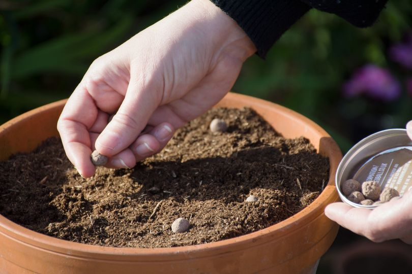 Scattering Seed Balls in a pot