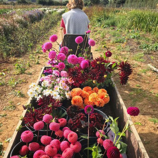Florist Flower & Farmer 3