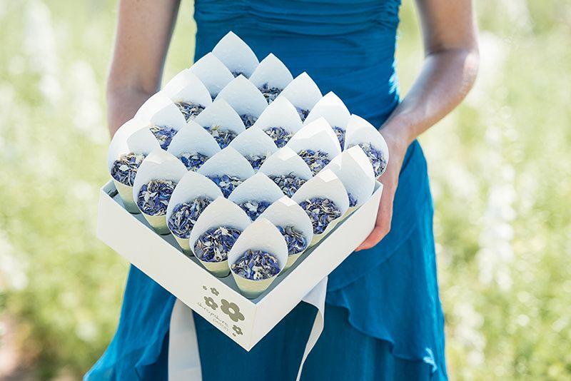 Shropshire Box with 25 cones