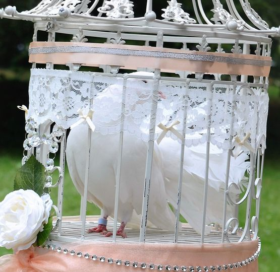 Decorative dove cage