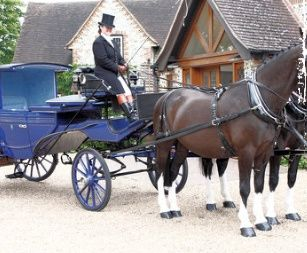 Pair of horse and blue carriage