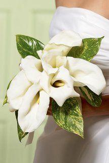 Chic White Calla Lily