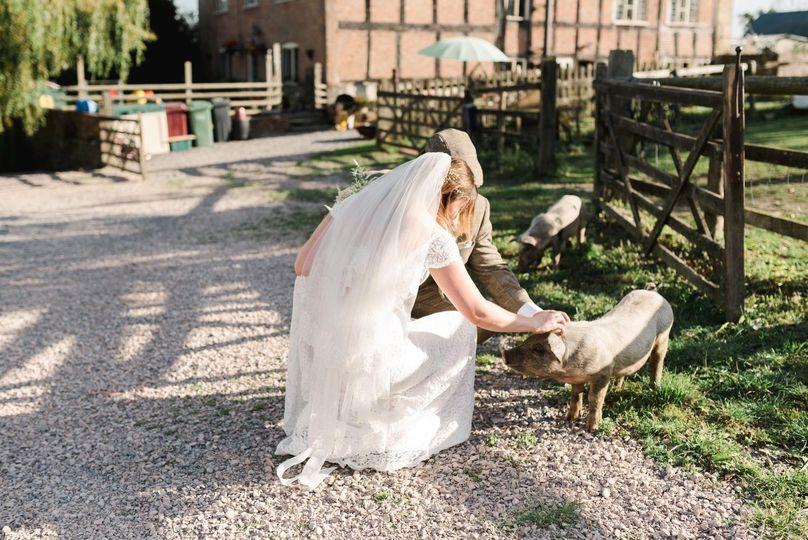 Newlyweds with farm animals