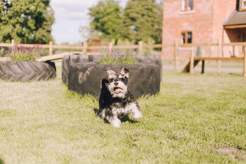 Dedicated doggy play paddock