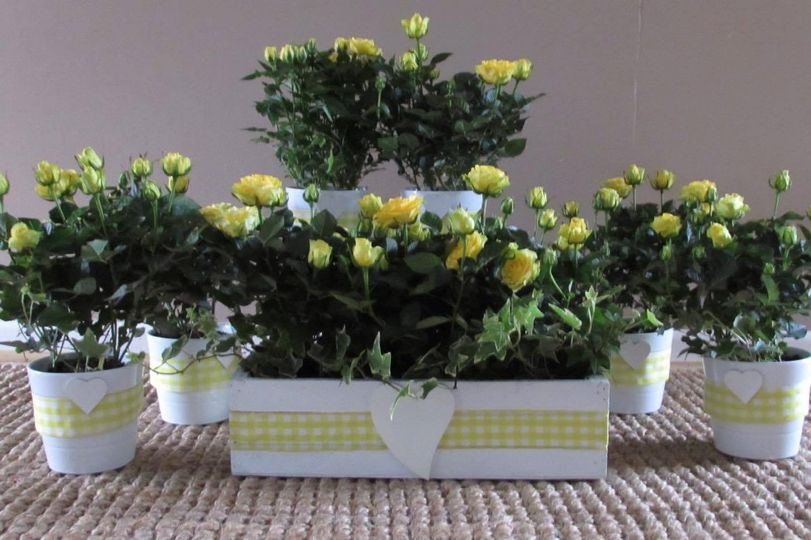 Planted table centerpieces.