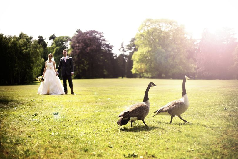 Grounds with Geese