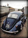 Lola the '66' beetle