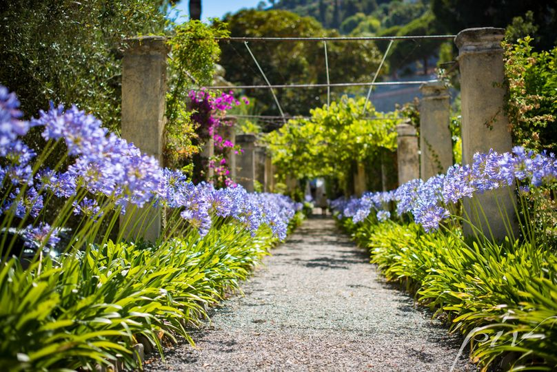 Villa agapanthus in bloom