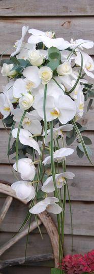 Phalaenopsis Cascade