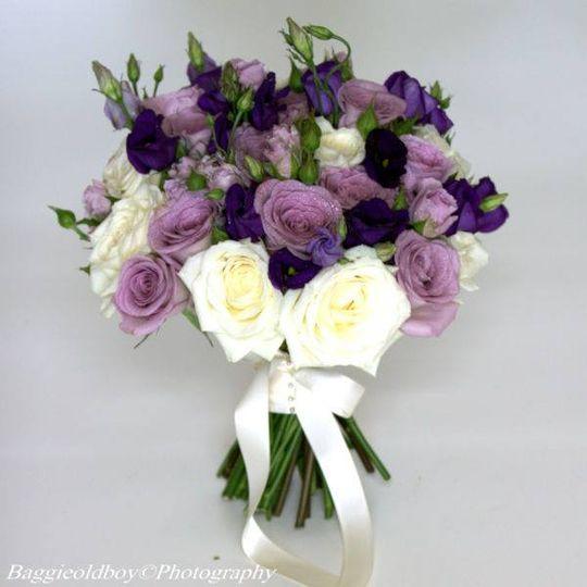 Stunning purples