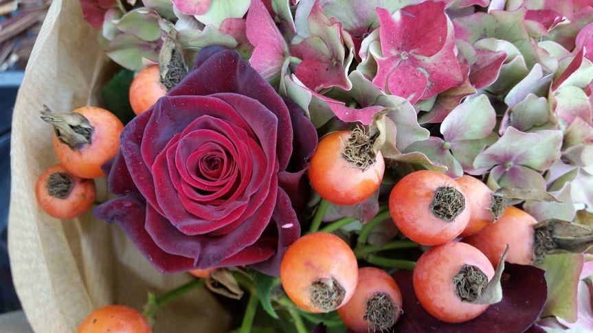 Autumn rose hips