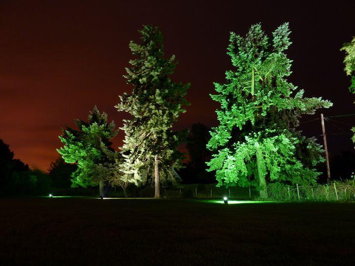 Tree Uplights