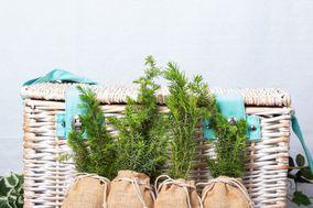 Alba Trees
