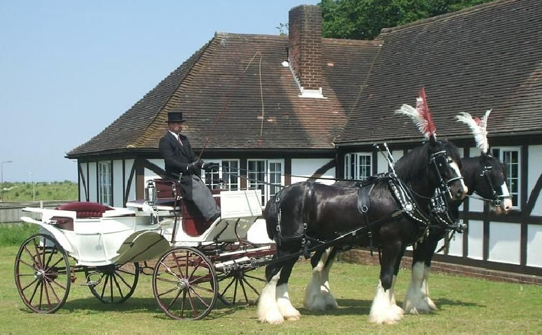 gorgeous horsedrawn carriage